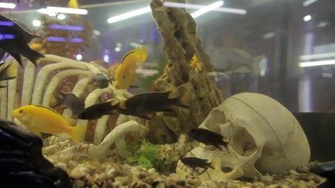 The skeleton in the aquarium Archivo