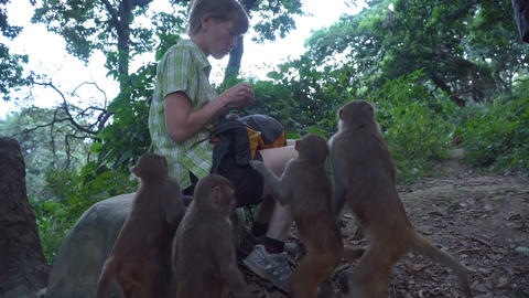 The girl feeds wild monkeys Footage