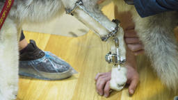 Dog with a broken paw in a veterinary clinic Footage