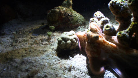 Octopus crawling around seabed eating creatures, Live Action
