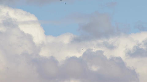 Ravens and bald eagle soaring in a cloudy sky Footage