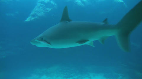 Shark swimming toward rocks in murky blue water Footage
