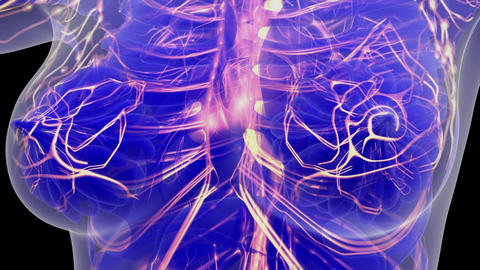 science anatomy scan of woman heart and blood vessels glowing Footage