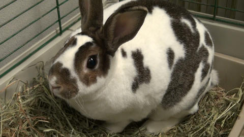 Sniffing bunny Stock Video Footage