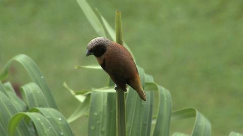 Tahiti bird Live Action
