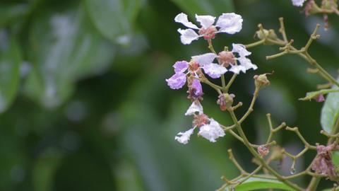 Rain drops on wild flowers Footage