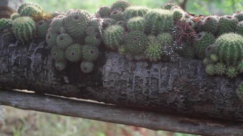 Cactus Zen Garden Pan Right 2 stock footage