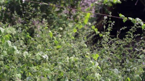 Butterfly Fly In A Meadow stock footage