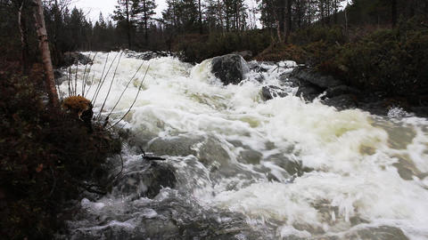 Wild spring stream flows through taiga forest Footage