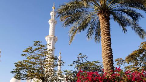 Beautiful mosque surrounded by tropical nature ビデオ