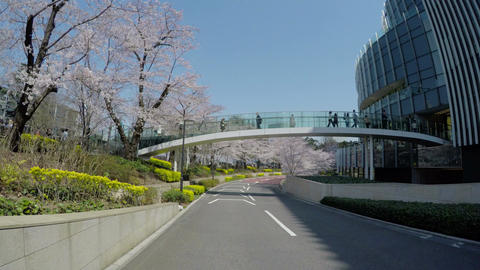 Blooming cherry blossoms and crowd gathering at Roppongi Midtown Footage