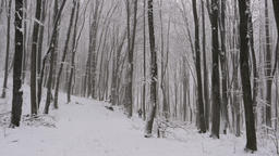 Senior man in the distance walking his dog through beautiful misty winter forest Footage