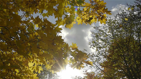 Autumn leaves against the blue sky Footage