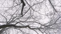 Follow shot, camera following female hiker, and tilt up towards beautiful snow Footage
