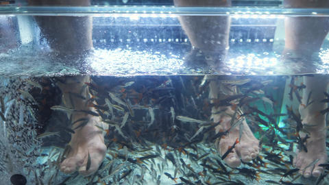 Tradition Thai Spa and Pedicure Procedure. Small Fishes Eating Dead Skin and Footage