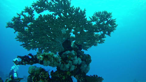 Underwater landscape coral pinnacle in the Red Sea Footage