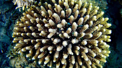 Marine life - Coral full of little colour fishes Diving in the Red Sea Footage