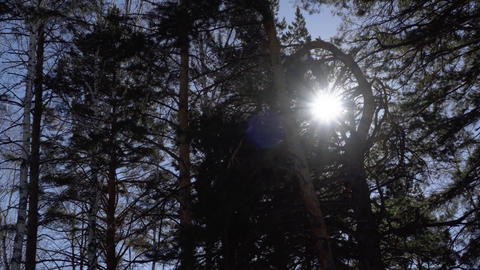 Sunshining through the canopy of the trees Live Action