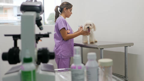 Doctor Visiting Dog In Studio With Vet And Sick Pet Live Action