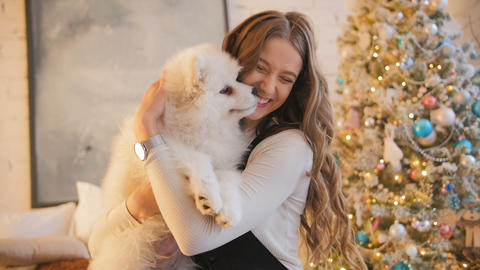 Pretty girl playing with samoyed puppy dog indoors. Christmas time, decorated Footage