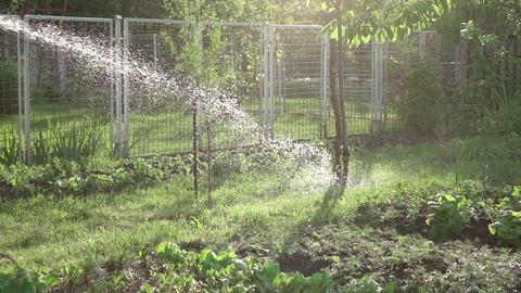 Video of watering vegetable garden in real slow motion Footage
