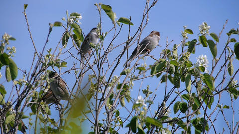 flock of sparrows perched on the branches of trees against the blue clear sky, Footage