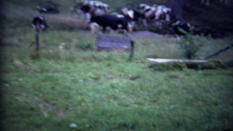 1963: Exotic Asian women carrying milk pails at rural dairy farm Footage