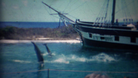 1963: Trained dolphins jumping pirate ship background Live Action