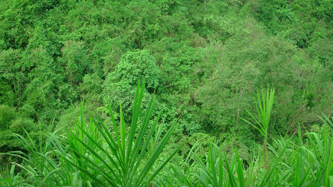 Lush. tropical vegetation swaying in the breeze Footage