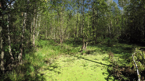 Panning across Swamp and Temperate Forest Wilderness Area…, Live Action