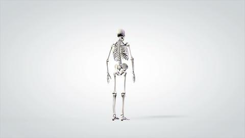 3d anatomical model human skeleton slowly rotating Footage