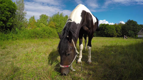 Pair of Horses Grazing in a Sunny Pasture Footage