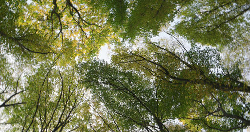 Abstract. Rotating Perspective Shot of Treetops against the Sky Live Action