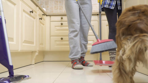 A dog prevents a housewife to clean the floor in the kitchen Footage