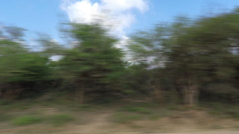 Trees Fly By in Passenger Perspective of Safari Tour in Sri Lanka Live Action