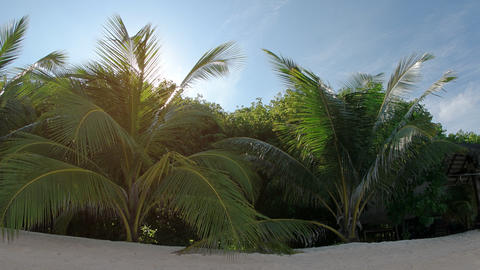 Sunshine Peeks through Palm Fronds over Tropical Beach. with Sound Footage