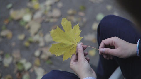 Male Hands Holds Autumn Leaf stock footage