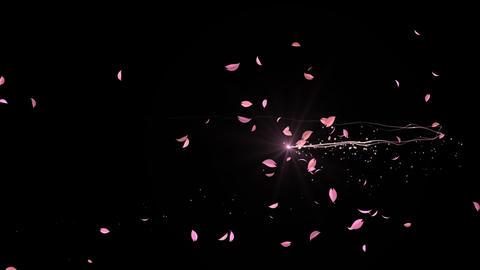 Cherry blossom splash 動画素材, ムービー映像素材