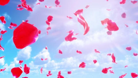 Sakura Petals Falling from Sky (Loop) Animation