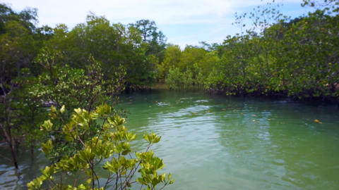 Video of Mangrove trees next to the ocean during low tide and high tide Live Action