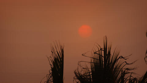 Sun Setting through the Haze over Palm Trees Footage
