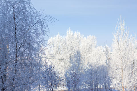 Winter trees in snow and blue sky フォト