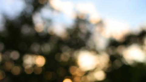 Bokeh sunlight through trees Footage