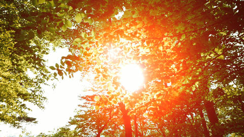 Colorful tree forest at sunset sun flare nature Footage