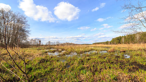 Spring swamp. Taken with the use of a slider. Time Lapse Footage