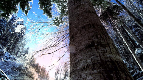 Snow winter trees woods forest snow trees snow falling Stock Video Footage