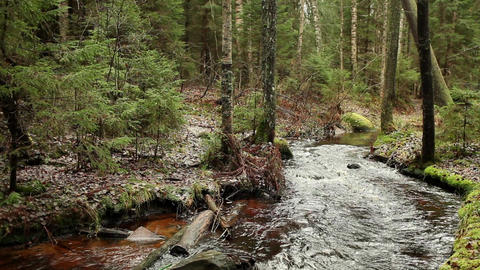 cold and fast forest river Footage