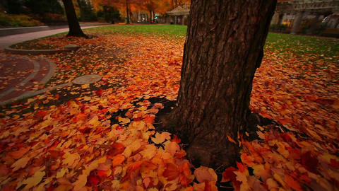 Tilt up from autumn leaves on city square ground Footage