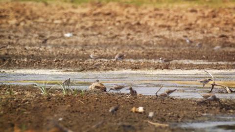 Wild Birds near Water at Yala National Park in Sri Lanka Footage
