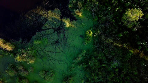 Span above the boggy area. River. HEAD OVER SHOT FLIGHT, From Dron Footage
